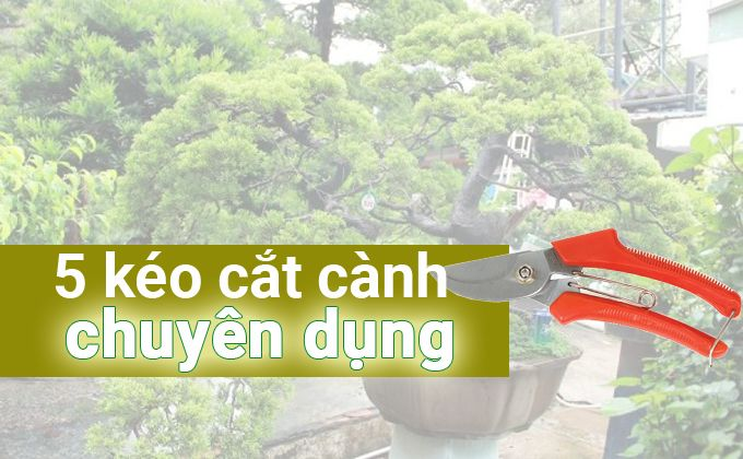 5-mau-cat-canh-tia-canh