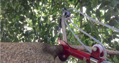 hướng dẫn sử dụng kéo cắt cành trên cao